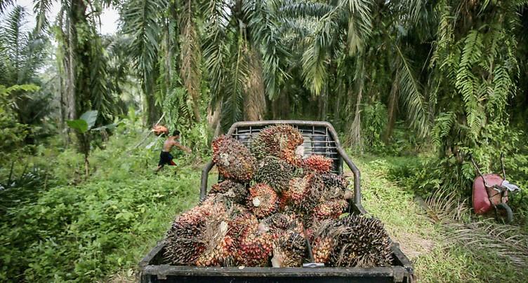 L'importation massive d'huile de palme inquiète Genève