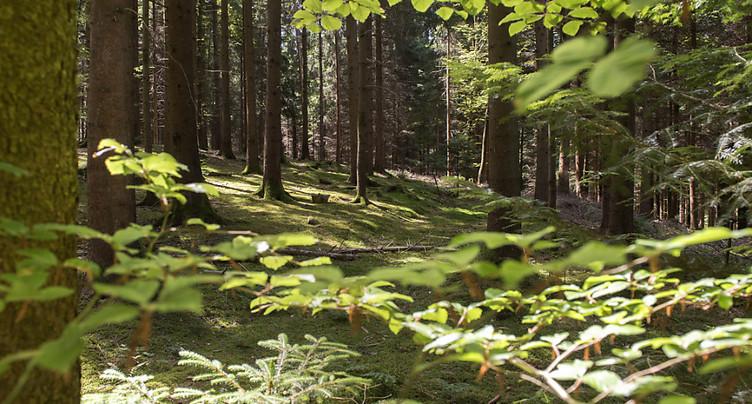 Festival du film vert: projections en Suisse et en France voisine