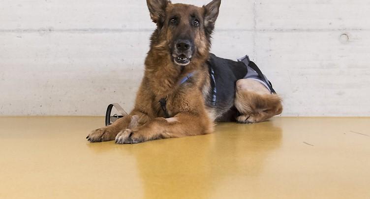 Après son périple de 400 km, la chienne Rapunzel rentre chez elle