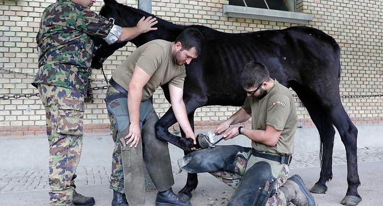 Le National veut sauver les chevaux de l'armée