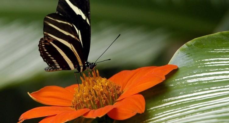 Début du forum mondial sur la biodiversité en Colombie