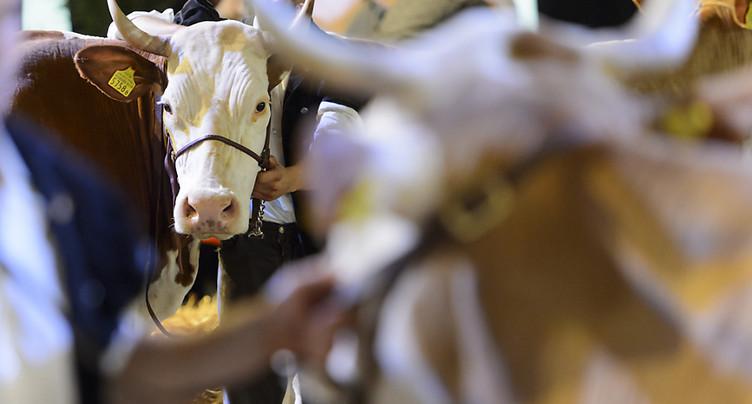 Critiques et louanges de la Protection suisse des animaux (PSA)