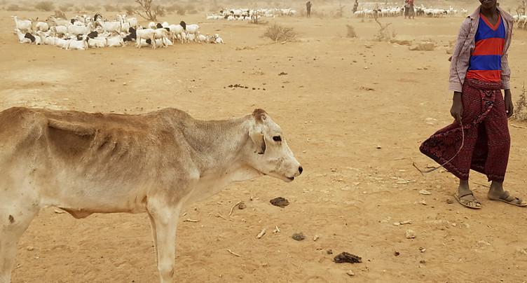 Avec les conflits et la sécheresse, le spectre de la famine avance