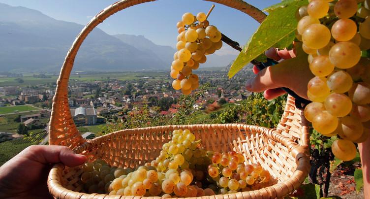 La part de marché des vins suisses reste stable