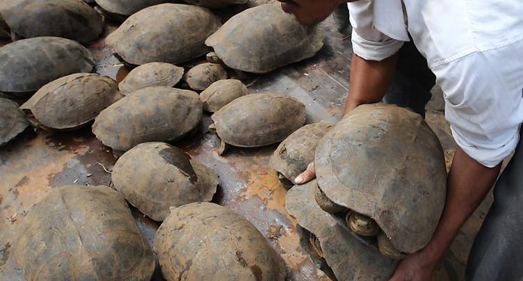 Plus de 30'000 animaux sauvages, victimes de trafics, interceptés