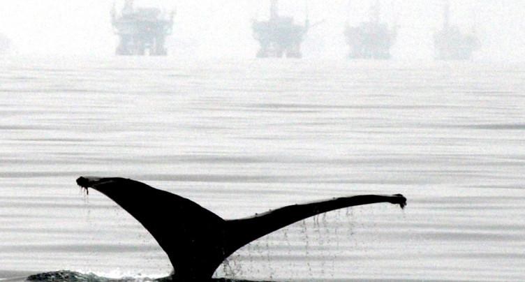 Plancton décimé, poissons sonnés: les effets du vacarme sous-marin