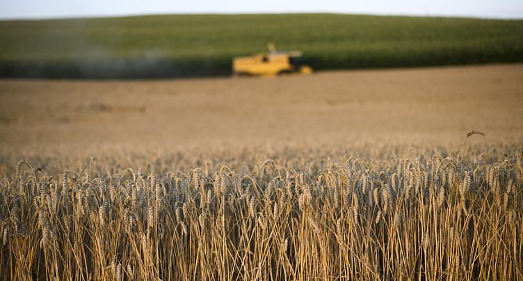 La récolte de céréales en Suisse est affectée par la sécheresse