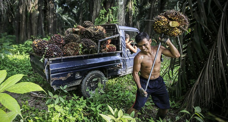 Les importations d'huile de palme ne seront pas restreintes