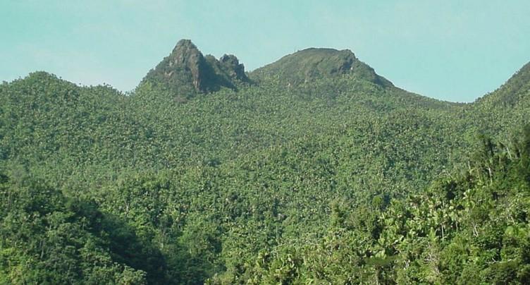 Dans la forêt tropicale, les insectes apparemment décimés