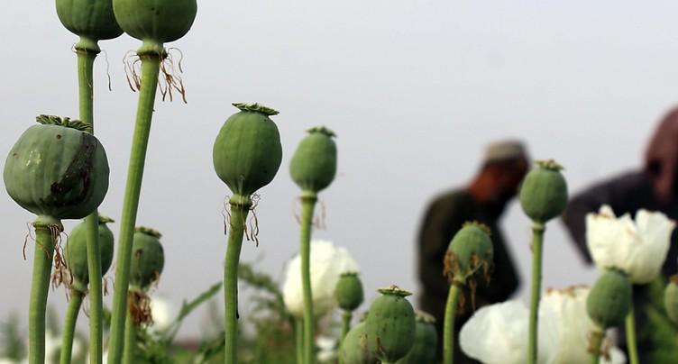 La « guerre contre les drogues » des Nations-Unies a échoué (ONG)