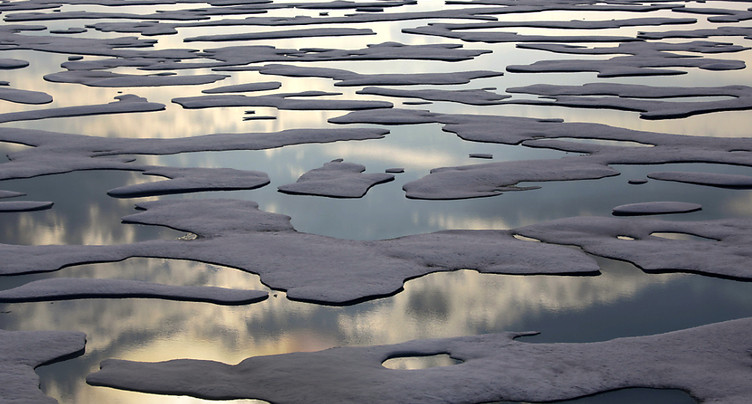 Moins de caribous, plus d'algues rouges dans un Arctique plus chaud