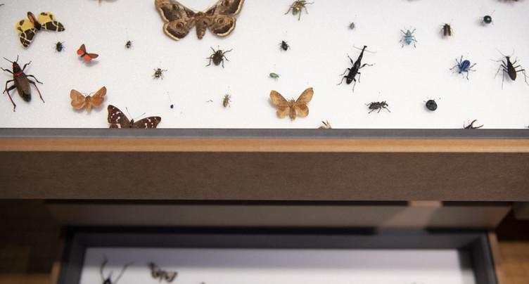 Une pétition pour sauver les insectes a été déposée