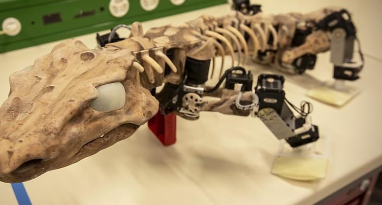 EPFL: un robot reproduit la démarche d'un animal fossile