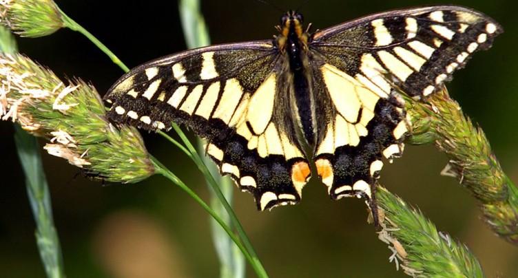 Il faut davantage de surfaces pour les oiseaux et les papillons