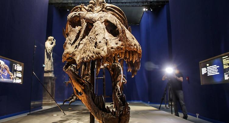 L'extinction des dinosaures causée par un astéroïde et des volcans