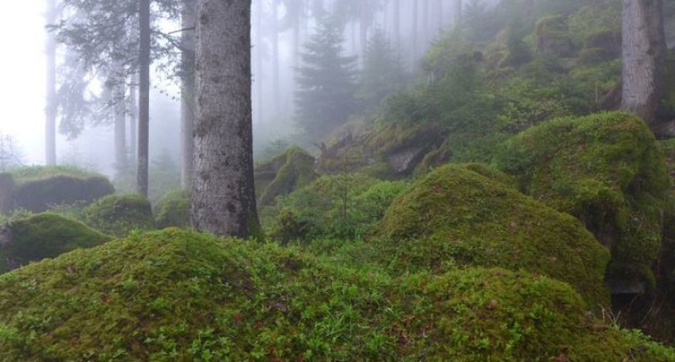 WSL: les photos de l'Inventaire forestier national en ligne