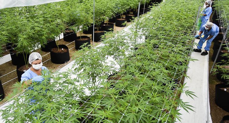 Blockimmo permet d'investir dans « l'immobilier du cannabis »