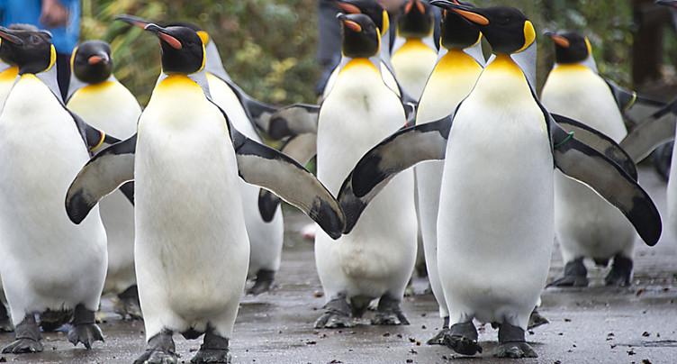 Moins de visiteurs au zoo de Bâle en 2018