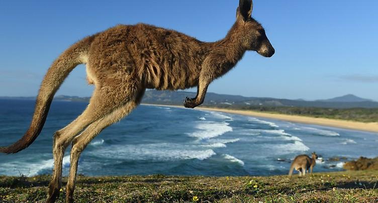 La police allemande interpelle une voiture avec un kangourou à bord