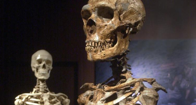 L'ancêtre des hommes modernes et de Neandertal plus ancien