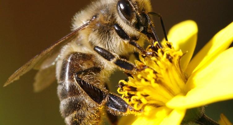 L'agriculture bio, c'est bon pour les abeilles, selon une étude