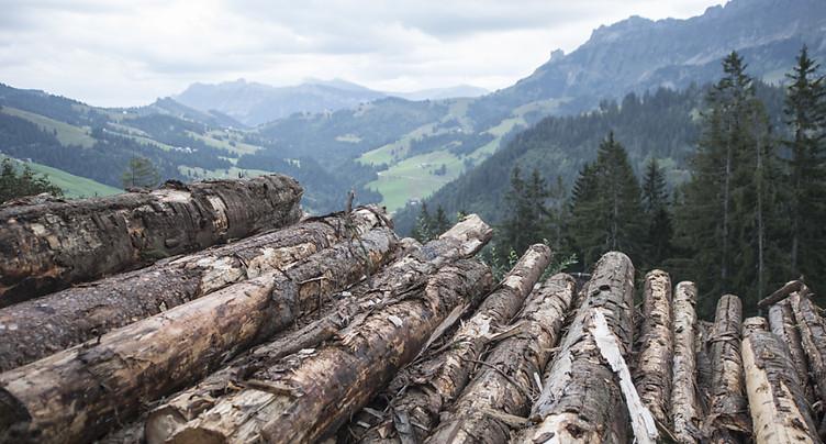 Bostryche, sécheresse et tempêtes ont marqué la récolte de bois
