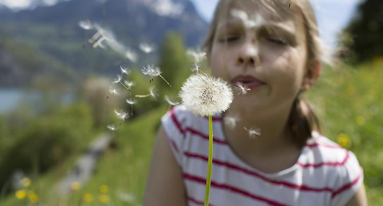EPFL: comment le pissenlit a optimisé l'envol de ses graines