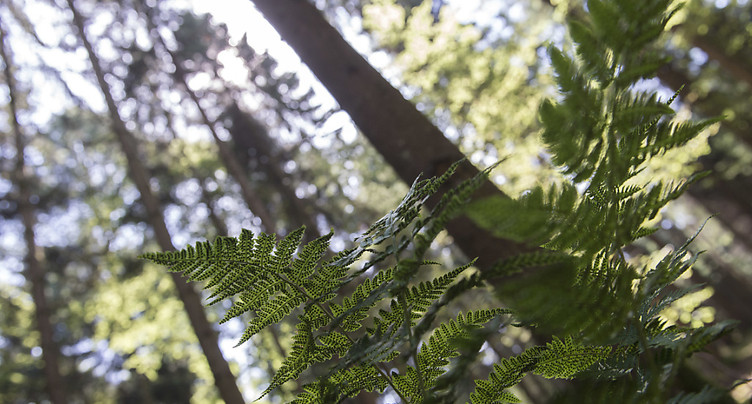 Vaud: nouveau paradis pour la forêt dans le Vallon de l'Hongrin