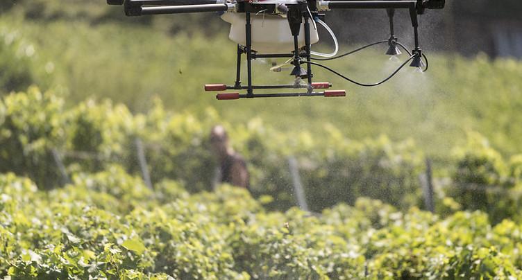 Hélicoptères et drones doivent cohabiter dans les vignes