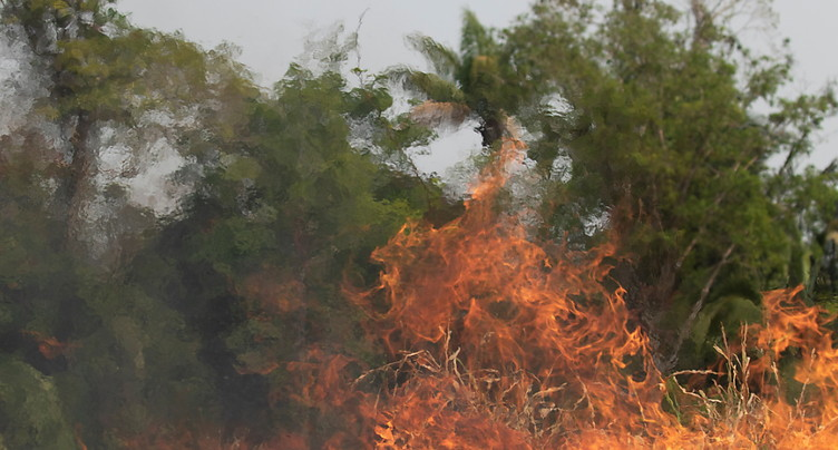 Les incendies ont ravagé près d'un million d'hectares en Bolivie