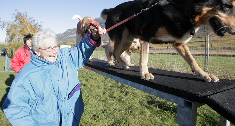 Réintroduction des cours pour détenteurs de chiens en Valais