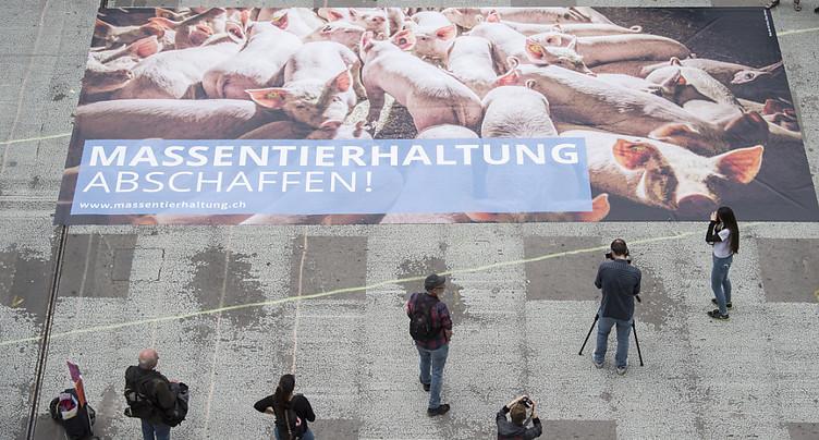 Initiative « Non à l'élevage intensif » déposée à Berne