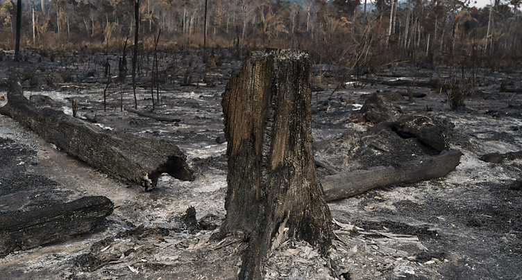 Déforestation: Bolsonaro donne le feu vert à des mafias, dit HRW