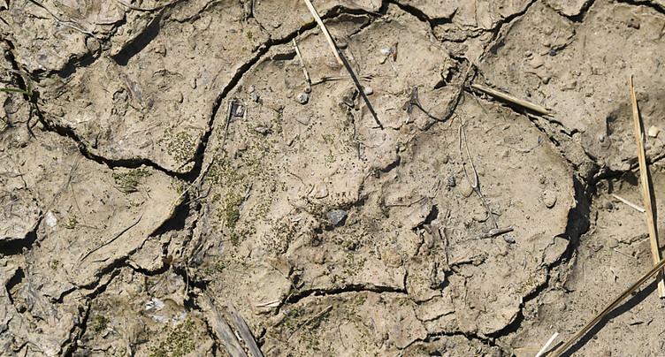 Les années les plus chaudes jamais enregistrées depuis cinq ans