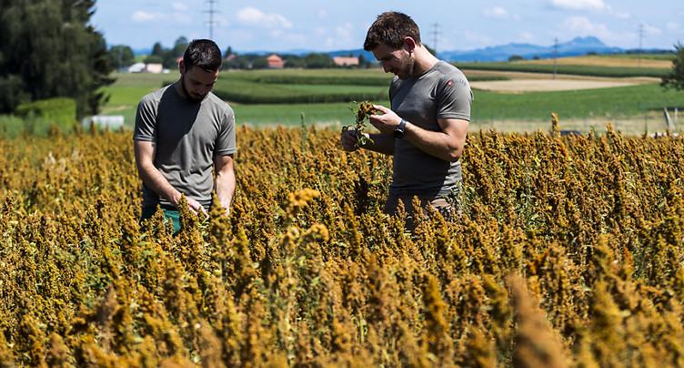 Fribourg évaluera l'impact du réchauffement sur l'agriculture