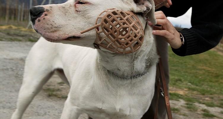 Le dogue Bandido et son maître dispensés de cours