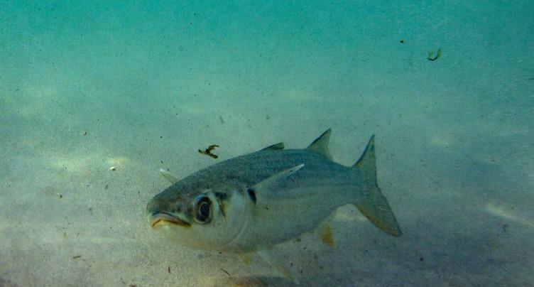 Déjà menacés, les océans en manque d'oxygène, avertit l'UICN