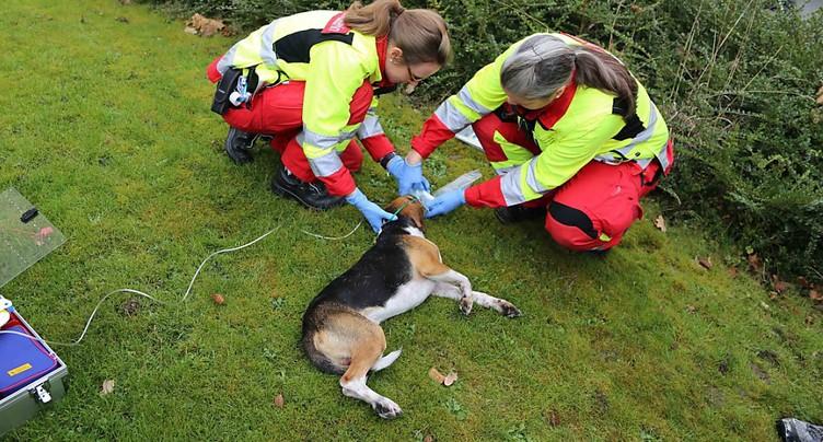 Un chien intoxiqué par la fumée sauvé à Steinhausen (ZG)
