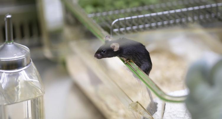 Le gouvernement ne veut pas interdire l'expérimentation animale