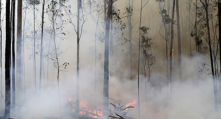 Des espèces menacées durement frappées par le feu en Australie