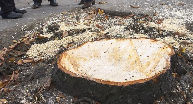 Genève: des mesures pour revaloriser les arbres