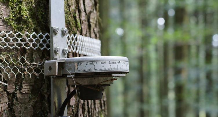 L'excès d'azote ralentit la croissance des arbres en Europe