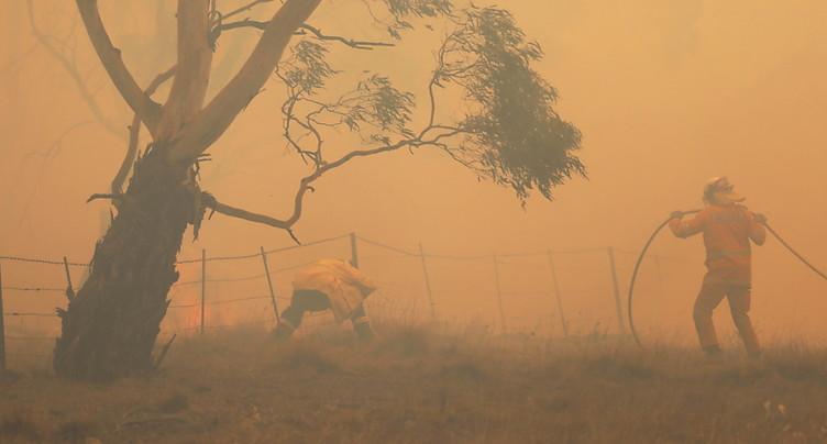 Les incendies en Australie ont détruit 20% des forêts