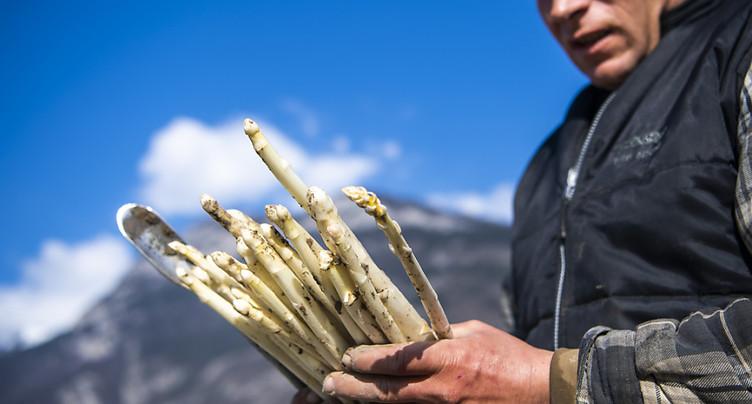 Les producteurs d'asperges valaisans plongés dans l'incertitude