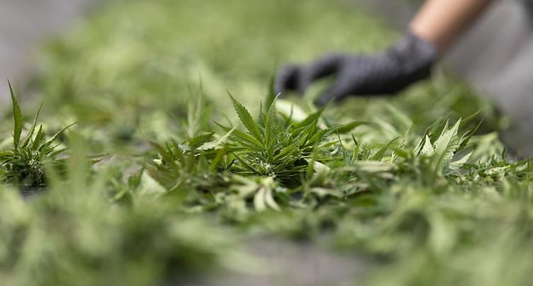 Le National discute des essais pilotes de distribution de cannabis