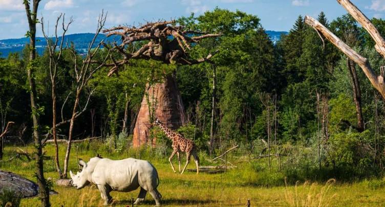 La savane africaine attend les visiteurs du zoo de Zurich