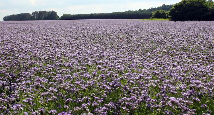 Prévisions polliniques en temps réel dès 2021