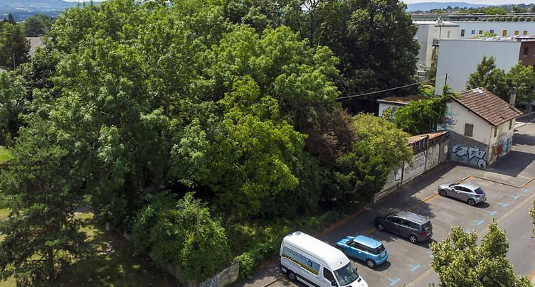 Genève autorise la coupe de 24 arbres sains pour un parking