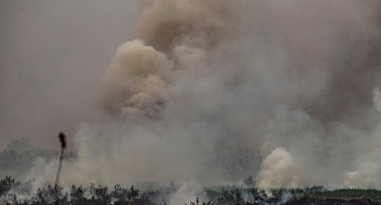 Brûlis à l'origine des incendies dans le Pantanal, selon un expert