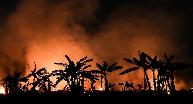L'Amazonie et le Pantanal en flammes - Bolsonaro sous pression